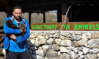 保護された2匹の子グマが大人気、事態懸念する声も モンテネグロ
