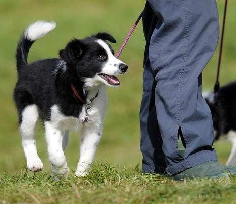 犬の「IQ検査」、英大チームが研究報告