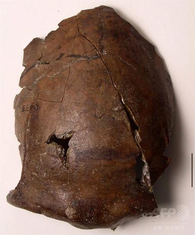 パプアで発見の6000年前の頭蓋骨、津波による世界最古の犠牲者?