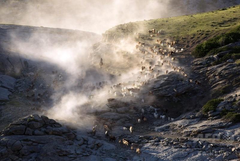 ウイグル遊牧民、夏の大移動 土ぼこりとともに進む「千年の道」