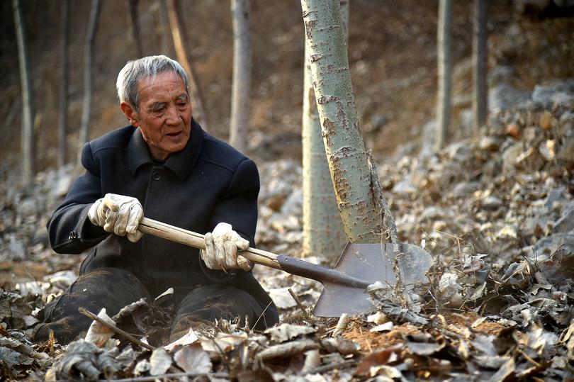 両脚を失った退役軍人、荒れ山の緑化に励む 河北省