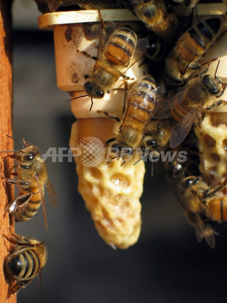 世界中から消えるミツバチを呼び戻せ!道路脇の「花壇」化計画 フランス