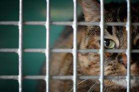 猫を生きたまま犬の餌に、動画を投稿した男を逮捕 ドバイ