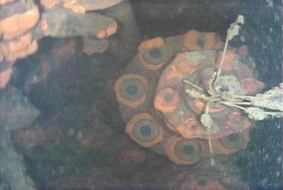水中ロボットで調査、福島第1原発 3号機