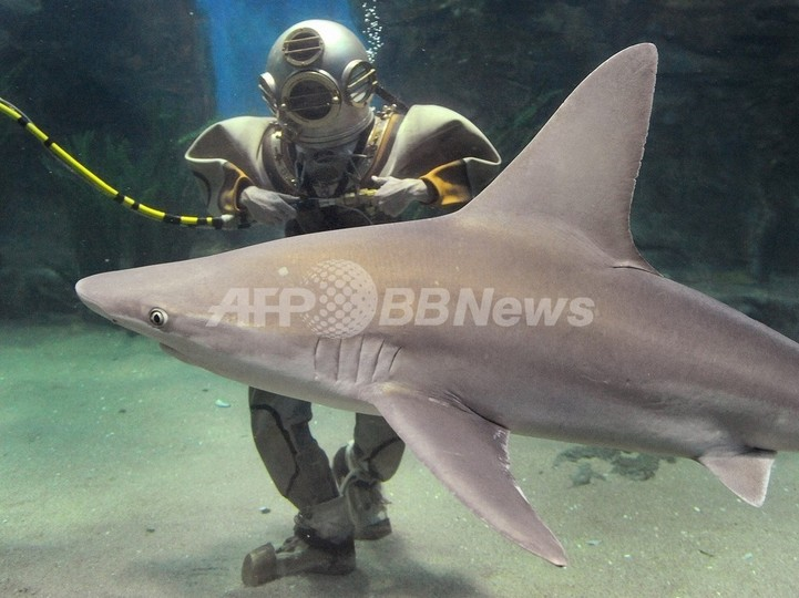 サメは色を見分けられない、オーストラリア研究