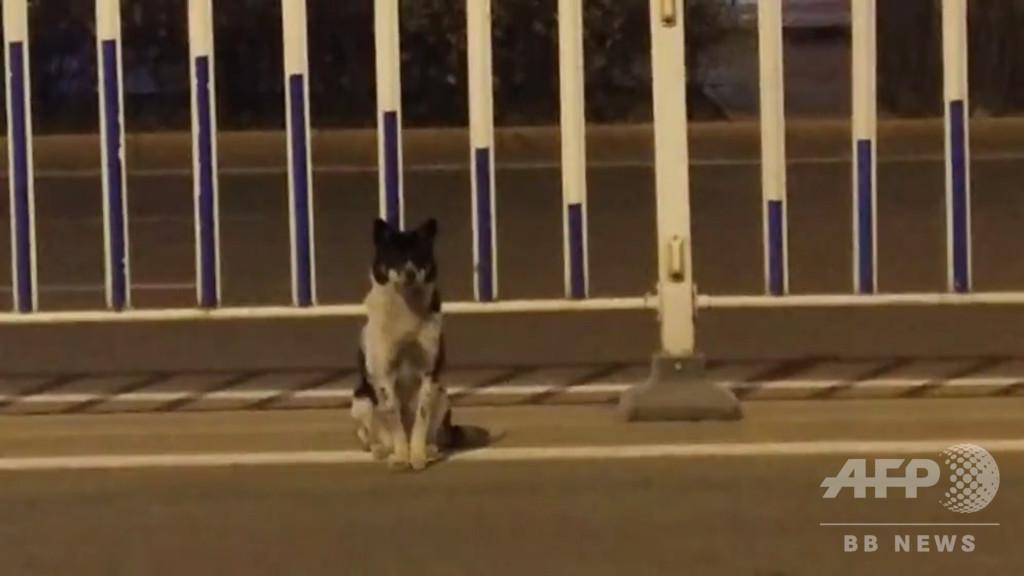 事故死した主人の帰り待つ? 犬が現場の道路脇に80日間、内モンゴル