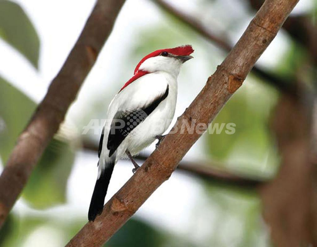 生物種の減少抑制、2010年までの目標達成は不可 IUCN