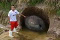 巨大「アルマジロ」の甲羅化石、アルゼンチンで見つかる
