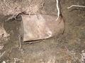 犬の散歩中に埋蔵金貨を発見、10億円以上の価値 米国