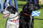英国からのスコットランド独立、賛成派が反対派に迫る 世論調査