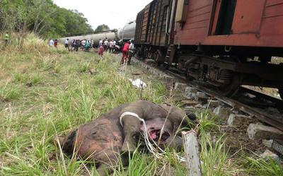 ゾウの母子3頭、石油輸送列車と衝突死 スリランカ