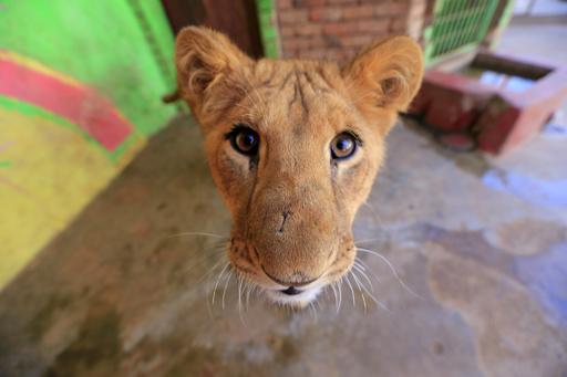 内戦下のイエメン、動物園の生き物たちも苦闘 餓死したライオンも
