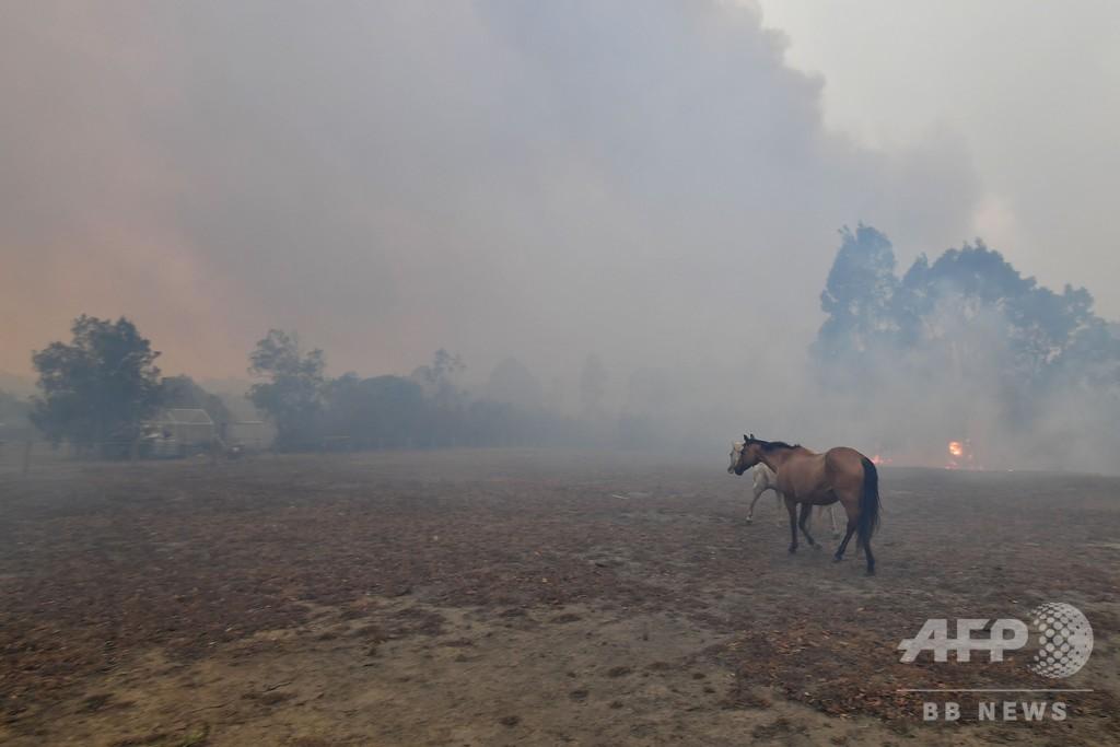 オーストラリア森林火災、沿岸の観光地に4000人 消防が特別救助隊