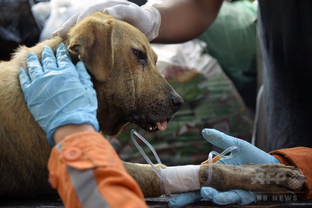 地滑り2日後、がれきから犬救出 コロンビア