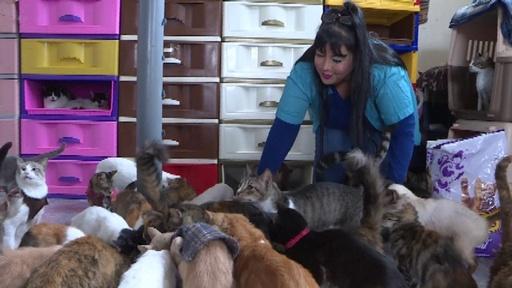 動画:自宅で病気の猫200匹を保護するペルー人