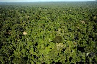 アマゾン「人類未踏の地」、過去に100万人居住の可能性 研究