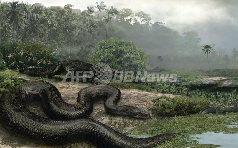 全長バス1台ぶん、史上最大のヘビの化石 コロンビアで発見