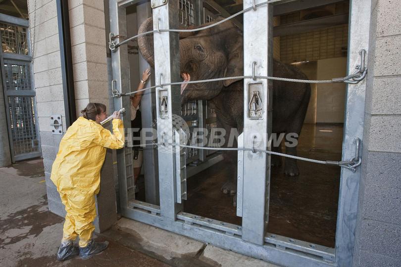 「はいアーンして」、ゾウの健康診断 米サンディエゴ動物園