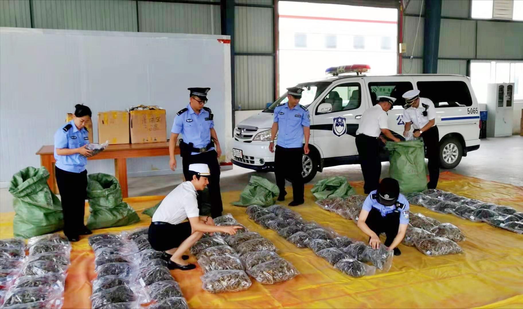 昆明税関、密輸された乾燥タツノオトシゴを押収 時価総額1億元超