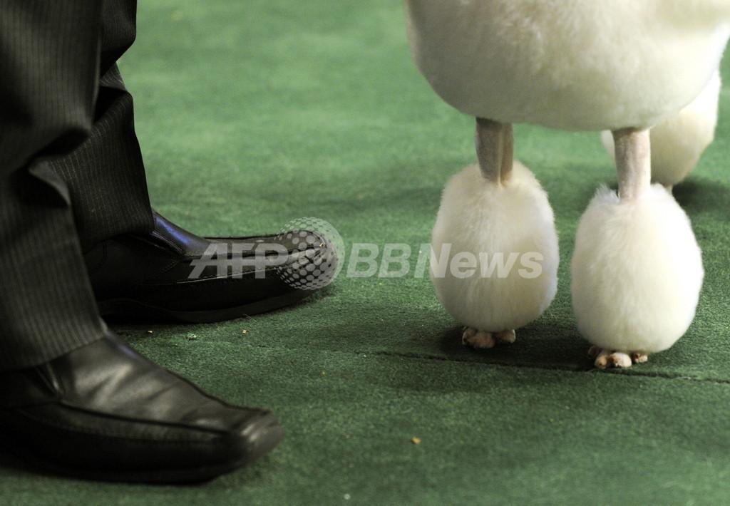 愛犬4匹を誘拐された豪男性、身代金は2500万円
