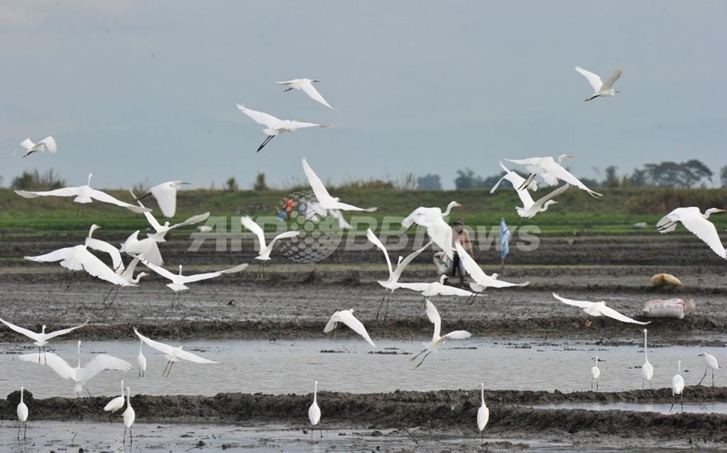 海面上昇で渡り鳥に危機、消える餌場や休息地