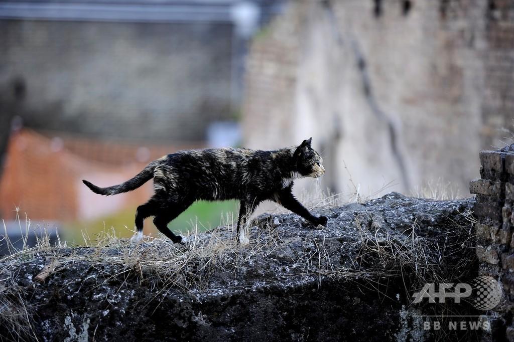 ネコにかまれ狂犬病に、英国人男性が死亡