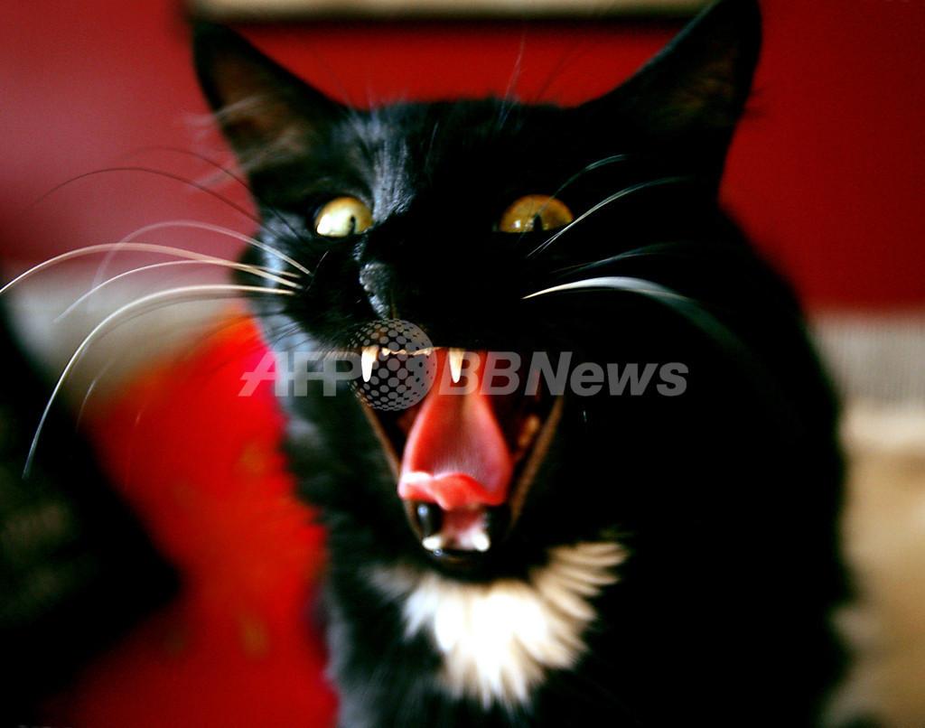 運転手をネコが襲撃、列車一時停止 ニュージーランド