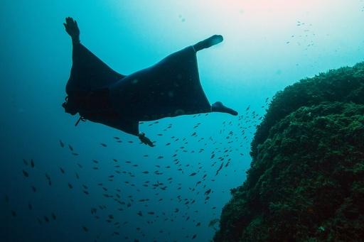 動画:海中を自由自在に「飛ぶ」翼、新型ウエットスーツ登場 モナコ