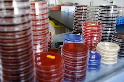 抗生物質が効かない薬剤耐性菌の脅威