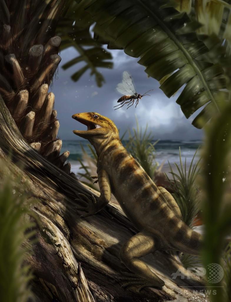伊アルプスの化石、最古のトカゲ祖先と判明 写真1枚 国際ニュース ...