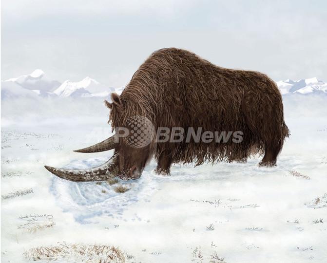 大型草食動物は氷河時代より前に高地で進化、サイエンス誌