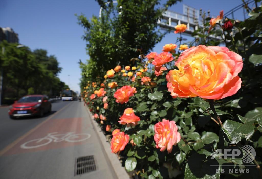 北京の約半分で緑化達成、毎年延べ200万人が植樹に参加