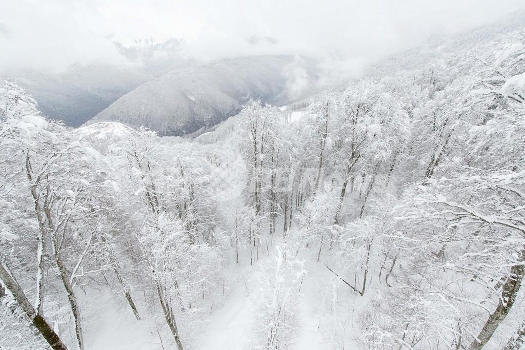 露ソチで雪の貯蔵作業が始まる、14年冬季五輪の雪不足に備え
