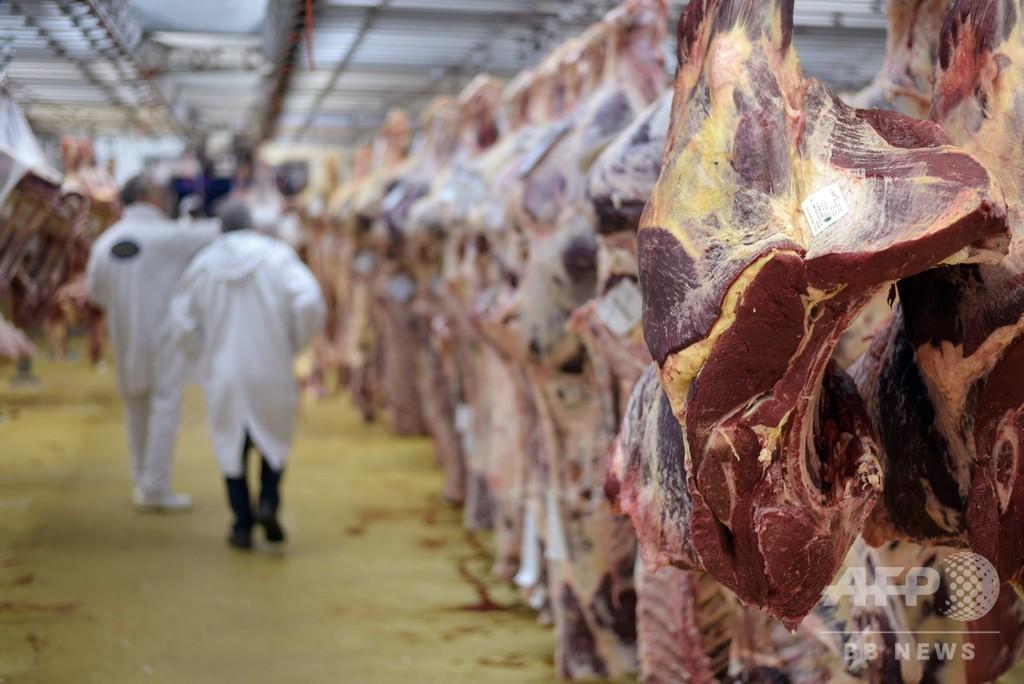 ポーランドから病気の牛の肉が流通か EU各国で回収・廃棄