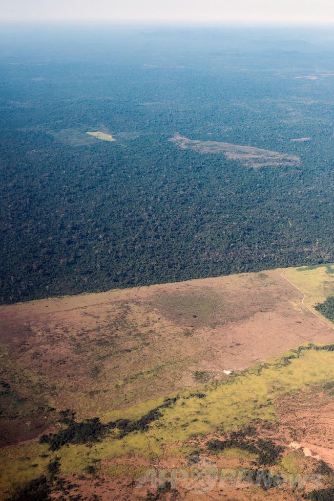 世界の森林生物種、半数が絶滅の危機 FAO報告書