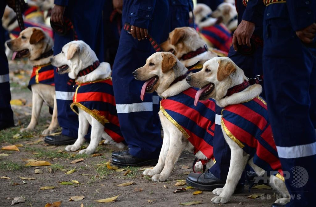 インド首都で警察犬の入隊式、りりしい姿を披露