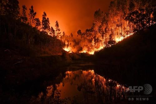 ポルトガルで森林火災、死傷者41人