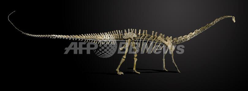 巨大草食恐竜の完全骨格標本 競売に出品へ
