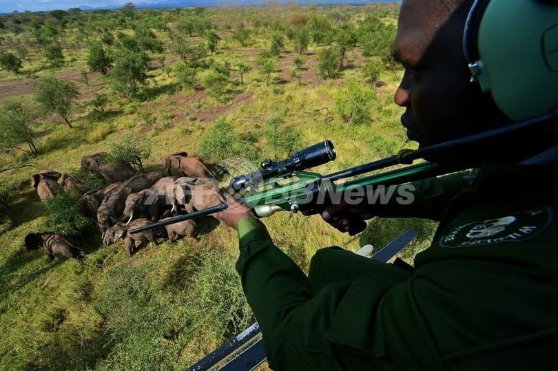 象牙密輸業者、1個につき罰金1ドル以下で釈放 ケニア