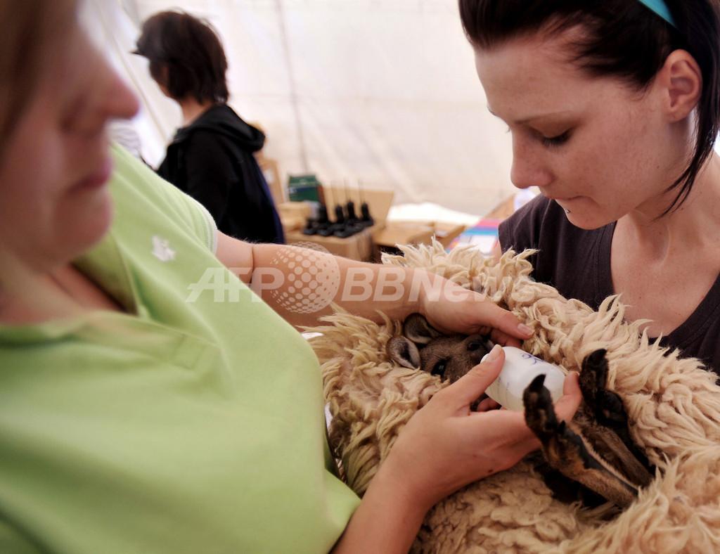 山火事で負傷した動物たち、専用救護所で手当て 豪メルボルン近郊