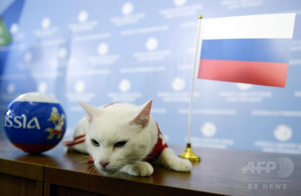 W杯の予言白猫「アキレス」、開幕戦は母国ロシアの勝利と予想