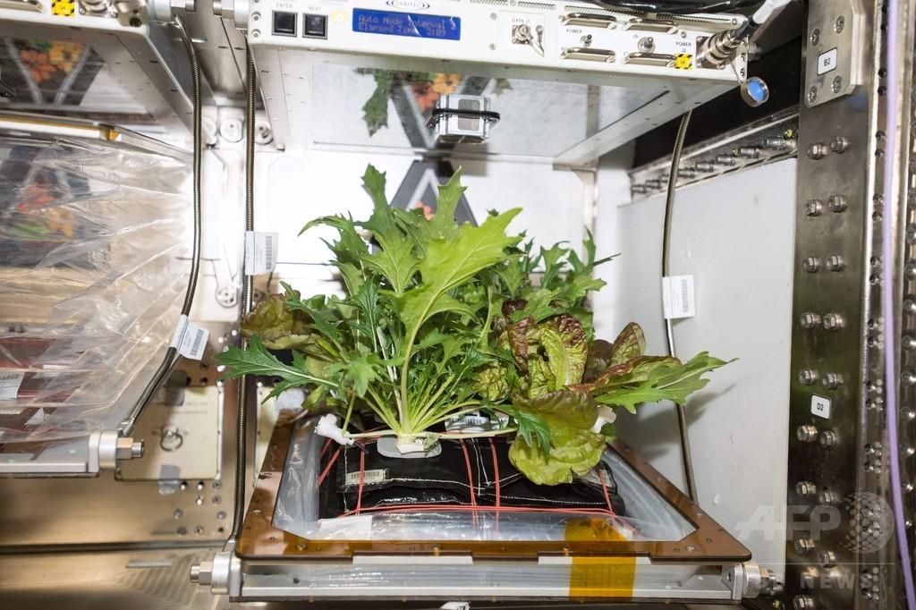 産地は「宇宙」 NASA飛行士がISSで野菜収穫