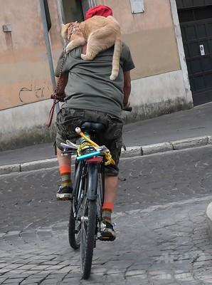 わりと必死、サイクリング男性の背にしがみつく猫ちゃん 伊ローマ