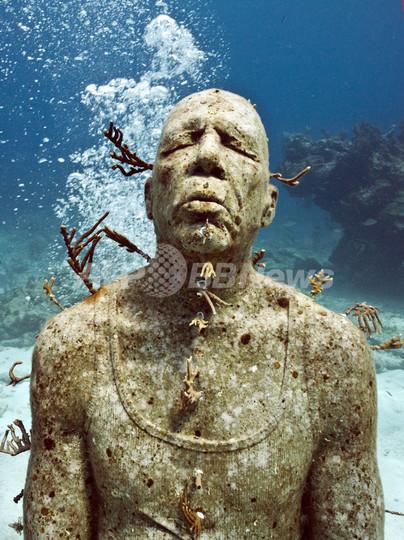 魚たちも鑑賞、「海中博物館」でサンゴ礁守れ メキシコ