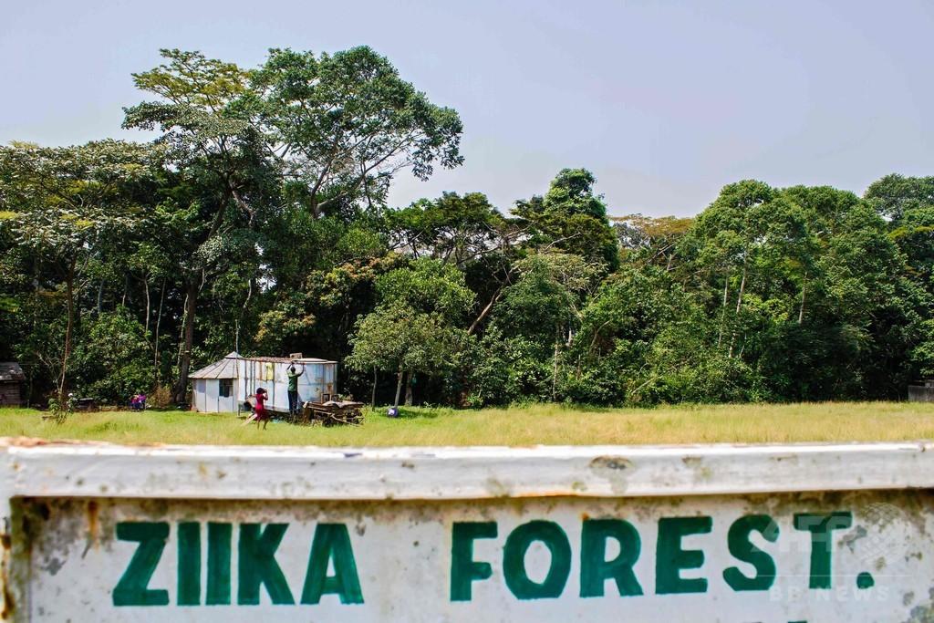 ジカウイルス発見の地、ウガンダの森を訪れて