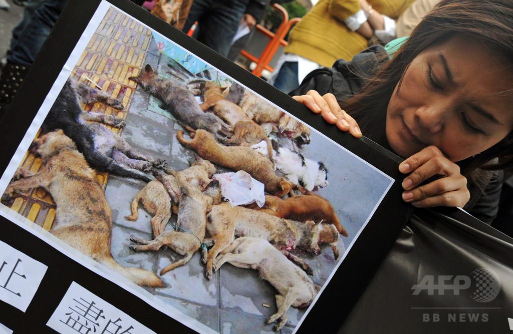 台湾、保護施設の動物たちの殺処分を法律で禁止