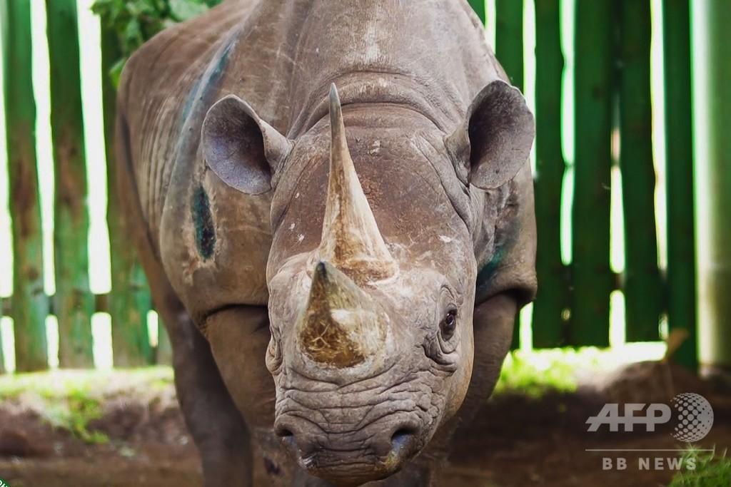 「世界最高齢」のクロサイが死ぬ、57歳 タンザニア