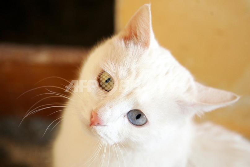 ネコののど鳴らす音、気づいて欲しいときは高周波 英研究