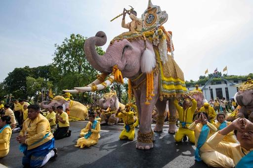 タイ・バンコクを象たちが行進、国王に敬意表す