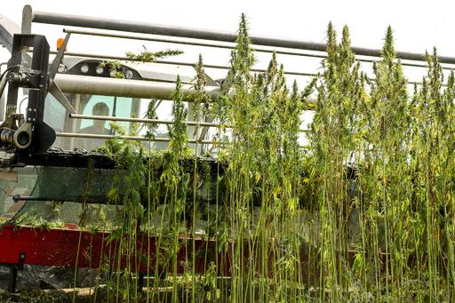 キプロスで医療用大麻合法化 EU諸国に広がる人気